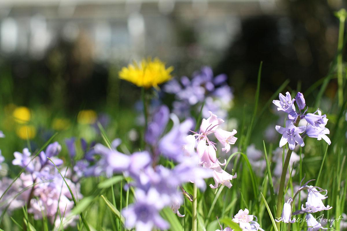 münster, botanischer garten, mai, nikesherztanzt, #nikeunterwegs, sonne satt, sonnenschein, blog, nrw, pflanzen, flora