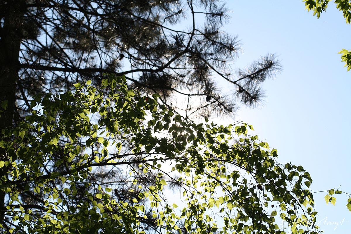 himmelblau & sonne satt vor dem mövenpick hotel in münster am aasee