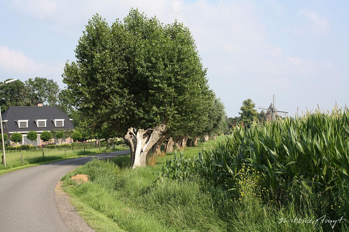 holland, netherlands, niederlande, travel, wanderlust, nikesherztanzt, roadtrip, blog, hansestadt, kampen,zwolle, fietsen, radeln, hanze route