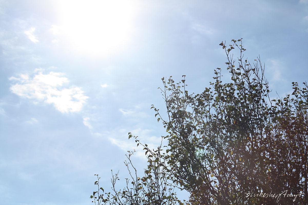 Amrum ,Öömrang, Kniepsand, Oomram, Nordfriesische Insel, Vogelkoje, Meeram, Schleswig-Holstein, die kleine Insel der großen Freiheit, Nordsee, Insel, Urlaub in Deutschland, #nikeunterwegs, travel, reisen, wanderlust, lieblingsinsel, urlaub, blog, nikesherztanzt