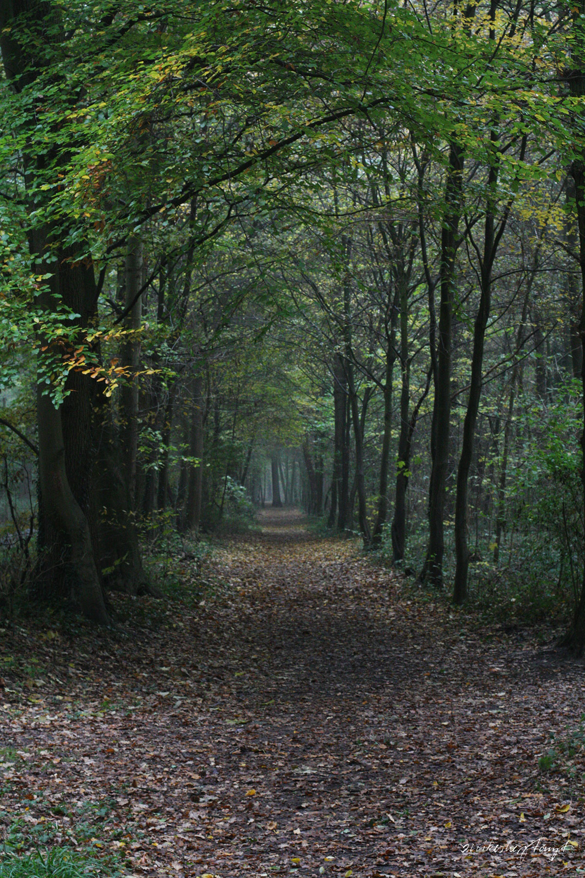 forstwald, krefeld, #nikeskrefeld, into the trees, the forest, wald, herbst, laub, nikesherztanzt