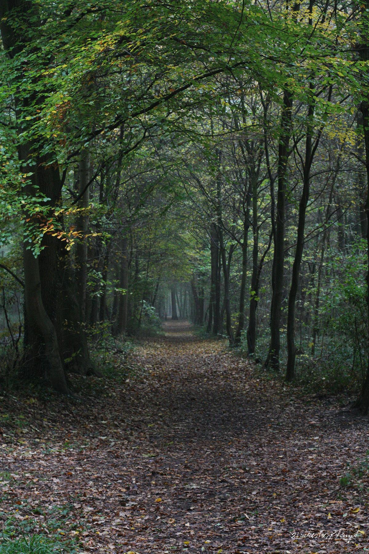 forstwald, krefeld, #nikeskrefeld, into the trees, the forest, wald, herbst, laub, nikesherztanzt