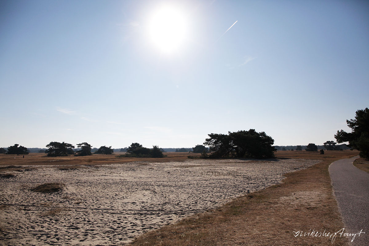 Het Nationale Park De Hoge Veluwe, de hoge veluwe, #nikeunterwegs, #visitbrabant, brabant,holland, niederlande,netherlands, wanderlust, nature, kröller müller, vist holland, travel, blog, nikesherztanzt