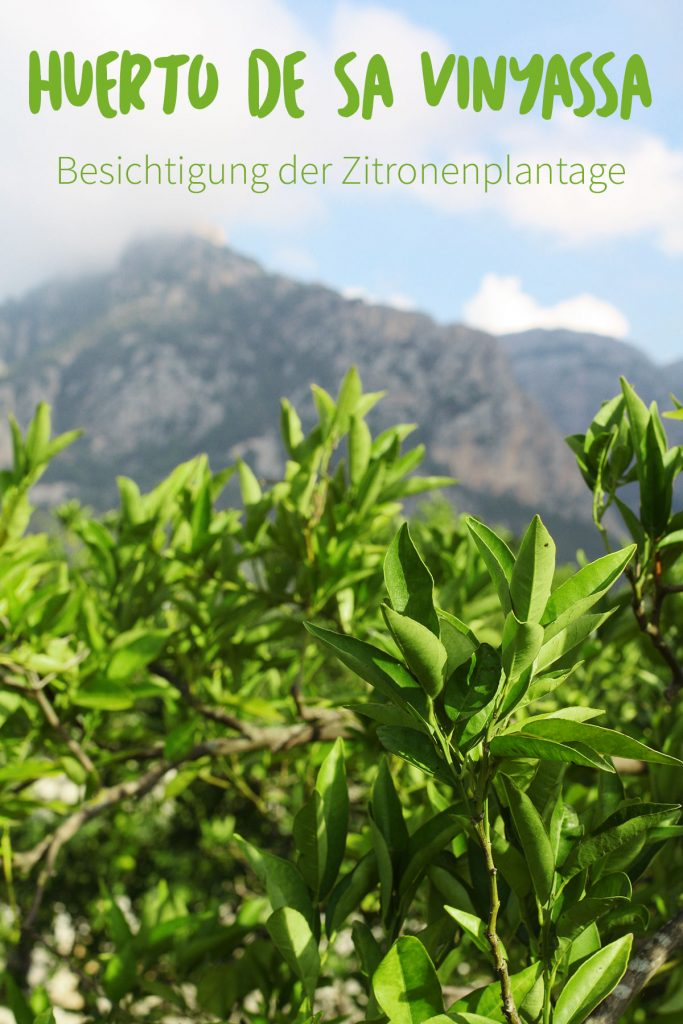 Führung mit Gründer Franz Kraus über die Zitrusplantage Finca Ecovinyassa der Landwirtschaftsinitiative Fet a Sóller auf Mallorca.