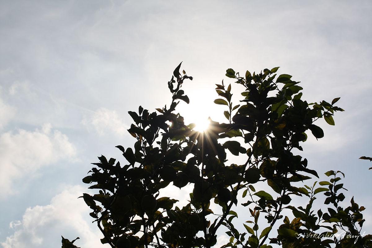 mallorca, sóller, fet a sóller, ecovinyassa, huerto de sa vinyassa, landwirtschaftsinitiative, zitrusplantage, franz kraus, finca, paradies, tal der orangen, nebensaison, november