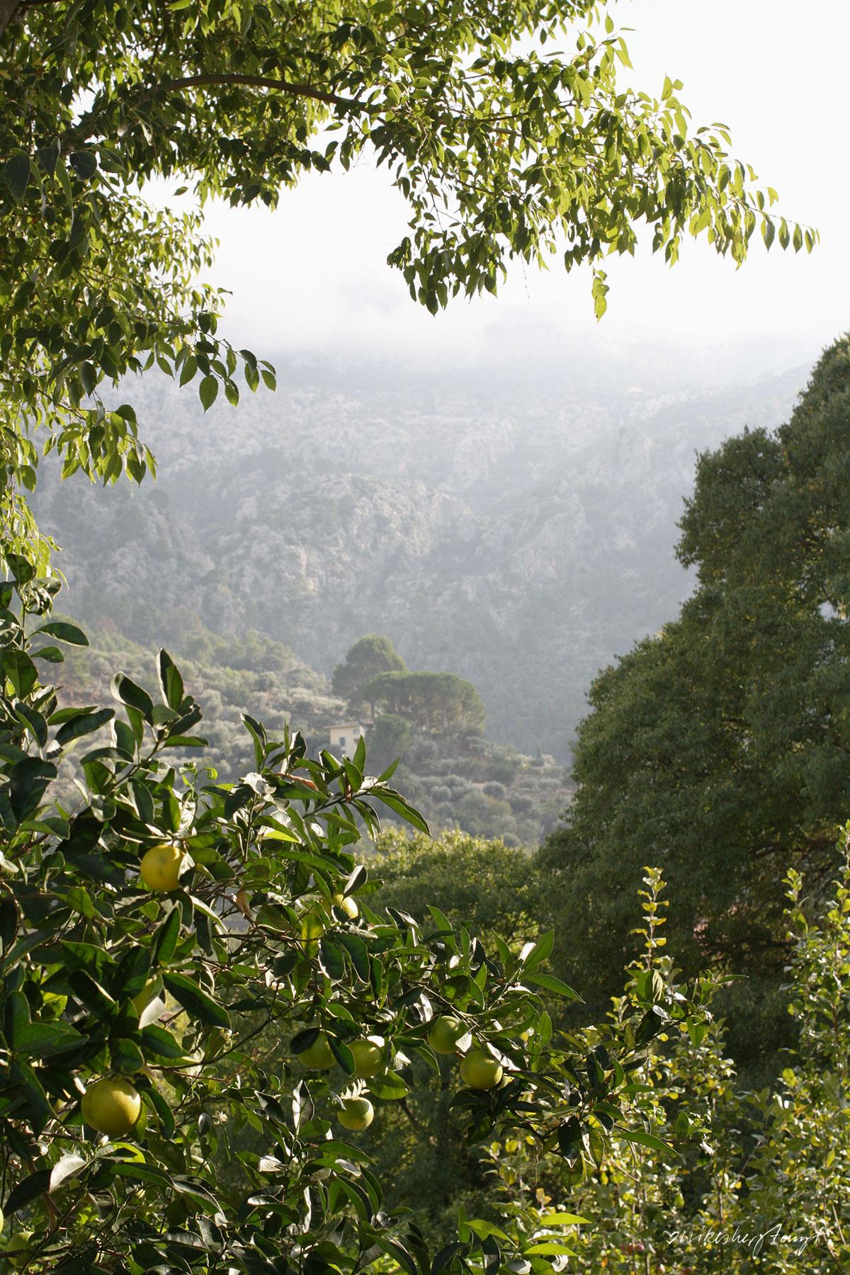 Ein Rundgang mit Gründer Franz Kraus über die Zitrusplantage Finca Ecovinyassa auf Mallorca, Fet a Sóller,
