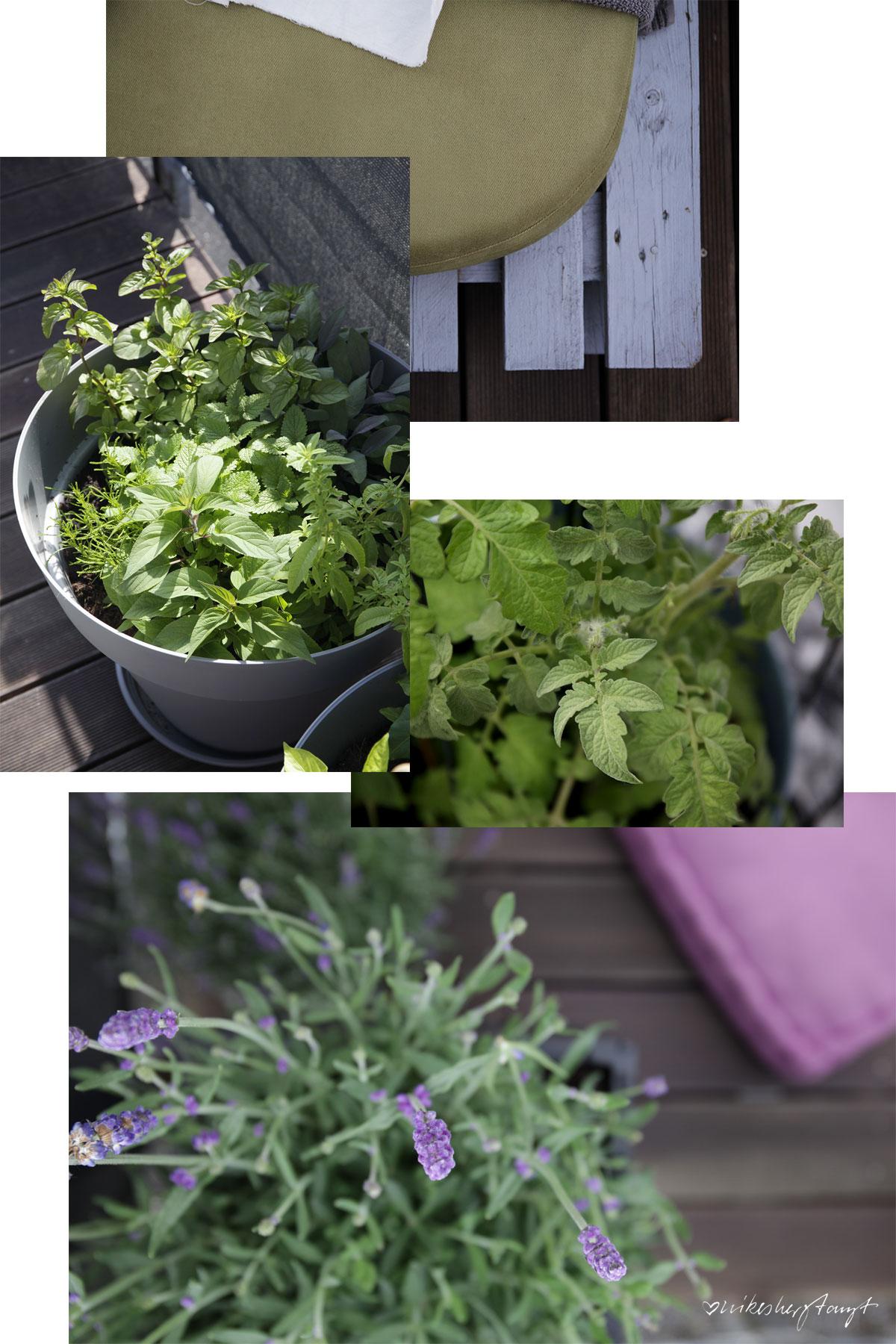 sonnendeck, urban gardening, tomaten, kräuter, pflanzen, dachterrasse, grüner daumen, blog, nikesherztanzt