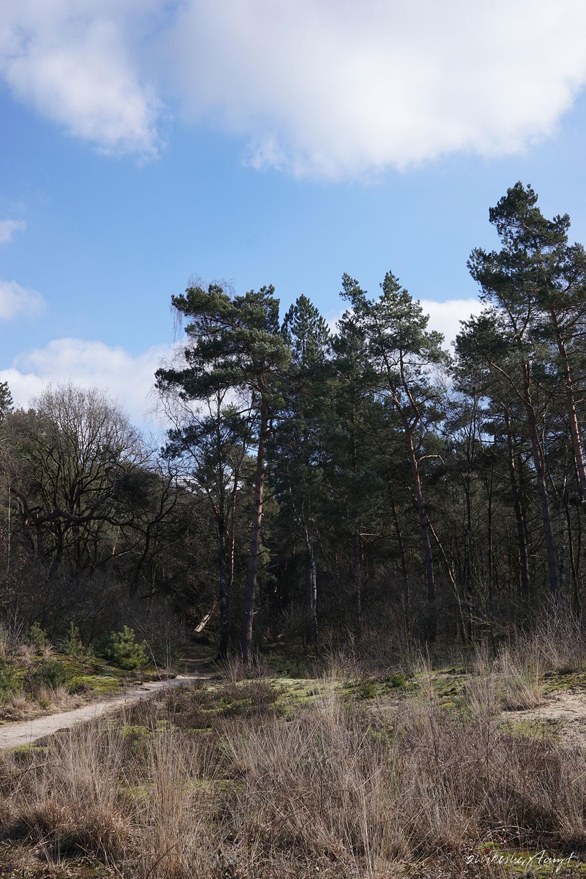 {holland} nationalpark de maasduinen - reindersmeer. //nikesherztanzt