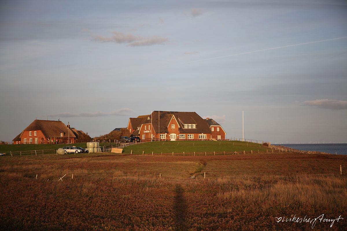 hilligenley - das gästehaus auf der hallig langeneß // nikesherztanzt